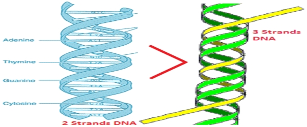 3-Strands-DNA